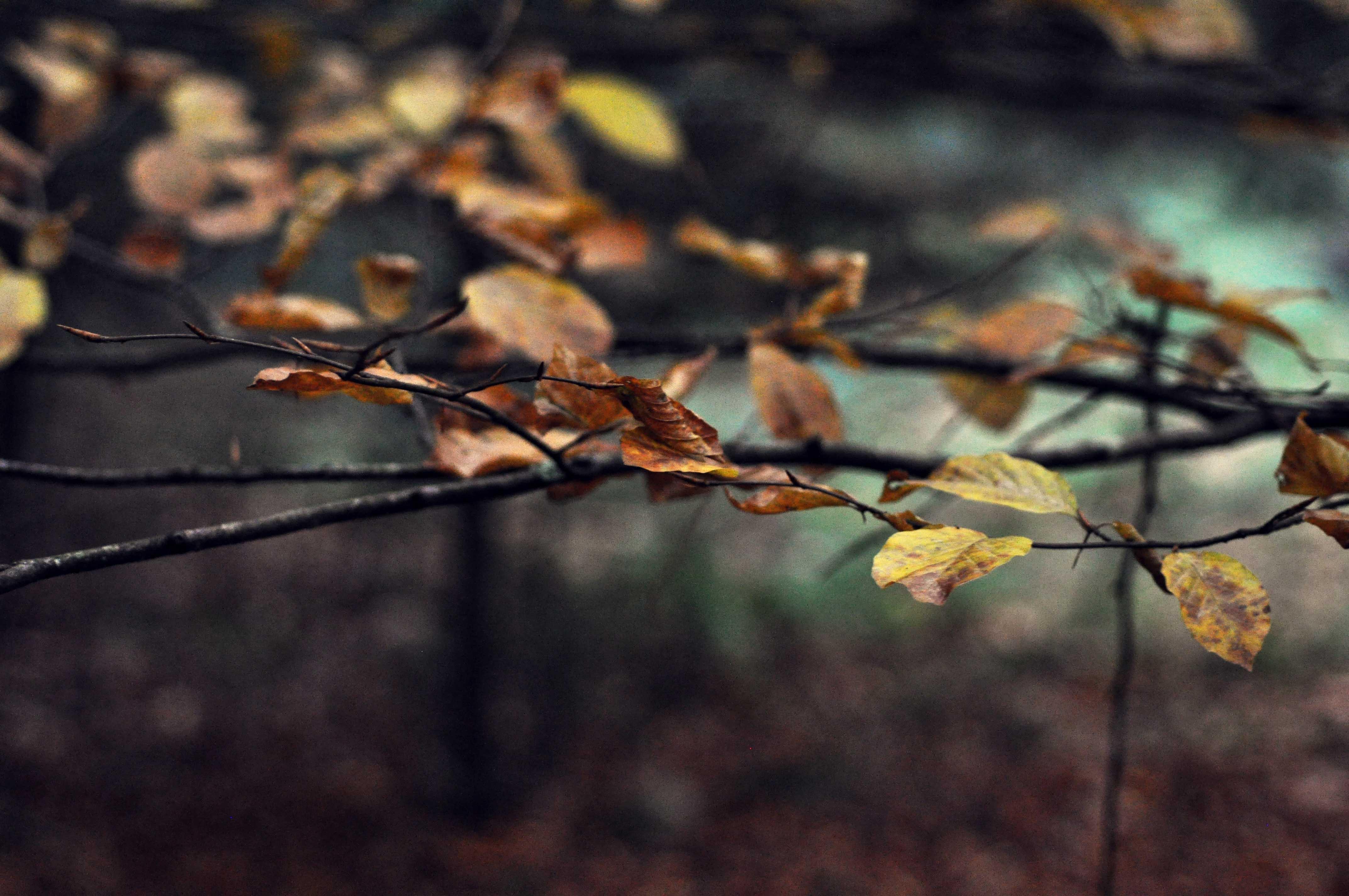 inspiration marie gonon - branches d'arbre aux feuilles jaunes